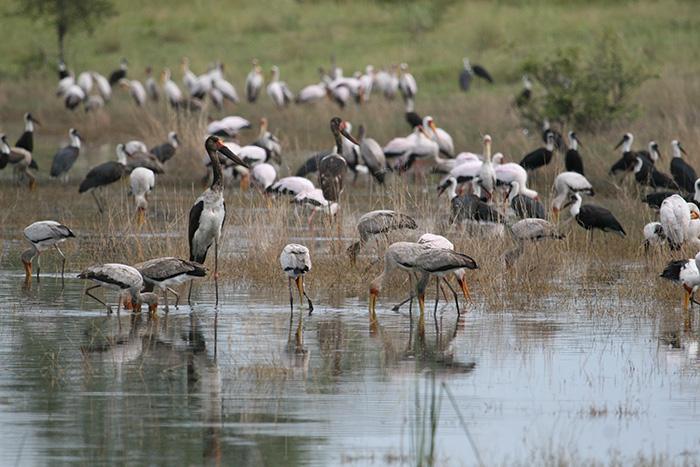 Wetland paradise